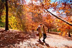 Mt Lofty Botanic Gardens Adelaide Autumn Hotspots