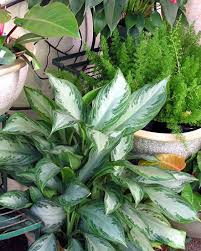 easy tropical houseplants hgtv