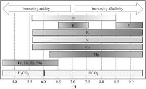 Grey And White Basalt In Agriculture And Bioenergy Biology Letters