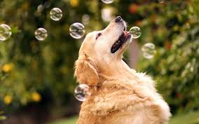 dog bubbles playful sunshine hd wallpaper 86856 jpg 1920 1200