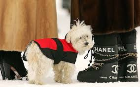 The must have service in luxury ski chalets – an au pair for your dog