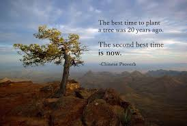 the best time to plant a tree was 20 years ago th picture quote