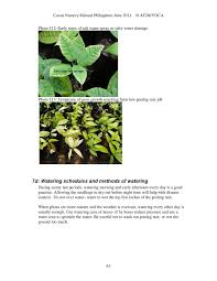cocoa nursery manual best nursery practices u2013 plantacion de