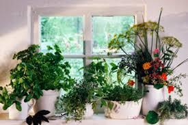 herbs indoors how to grow your own indoor herb garden howstuffworks