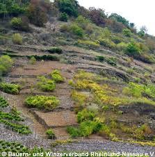 brachfläche moselprojekt maßnahme offenhaltung lebendige agrarlandschaften