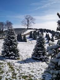5 awesome christmas tree farms
