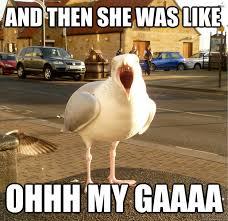 Finding Nemo Seagulls Meme - seagull meme google search too funny pinterest meme and memes