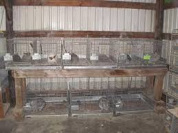 Stackable Rabbit Hutches Raising Small Animals In The City Raise It Kill It Eat It