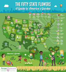 50 States Map With Capitals by Teach The Children Well Social Studies