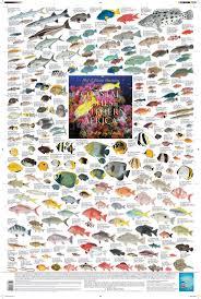 73 best poissons u0026 crustacés images on pinterest fishing stuff