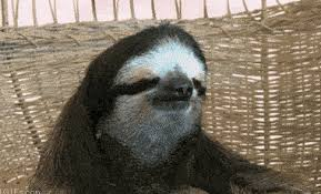 Angry Sloth Meme - deal with it gif sloth 12 gif images download