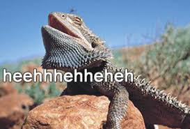 Horny Toad Meme - laughing lizard hhhehehe know your meme