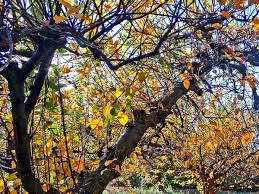 Colorful Pictures Fall Colors In Los Angeles 12 Places To Find Autumn Leaves