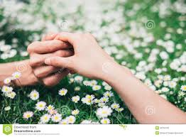 lovers holding hands on spring flowers field stock photo image