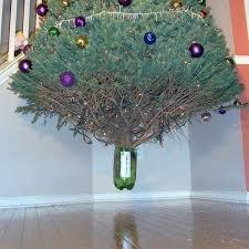 floating tree 9 pics izismile