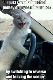 Insurance Meme - car insurance kitty funny