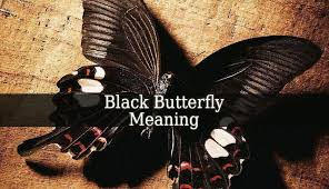 black butterfly meaning the black butterflies are beautiful