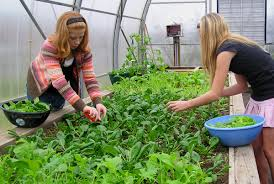 the smart garden putting the smart by nature principles into practice ecoliteracy org