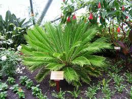 Indoor Fragrant Plants Indoor Tropical House Plants Home Decor Inspirations Best