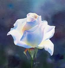 White Roses For Sale 83 Best Roses Images On Pinterest Drawings Flowers And Painting