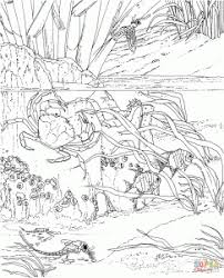 Free Download Crabs Coloring Pages Animal Seaweed Sea Animals Crab Coloring Page