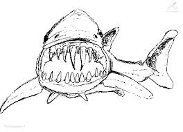 shark colouring pictures print quality coloring pages