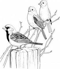 1746 sketch drawings images drawings digi