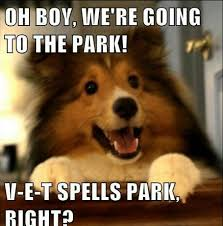 Puppy Memes - new dog vet meme puppy memes pups for sale puppies for sale in