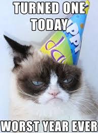 2022 best sweet gentle grumpy cat images on pinterest funny