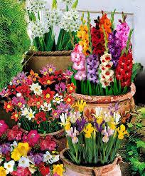 best 25 summer flowering bulbs ideas on