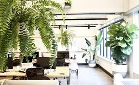 outdoor furniture pots plants for inside u0026 out garden design