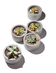 our concrete vessels make the perfect planter for small succulents
