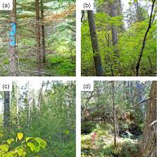 forests free full text a biogeochemical examination of