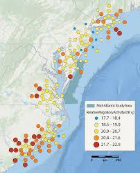 Waterfowl Migration Map Mid Atlantic Baseline Studies Results Migration Biodiversity