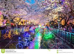 jinhae gunhangje festival is the largest cherry blossom festival