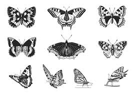 butterfly vector flowers plants animals birds fishes butterflies