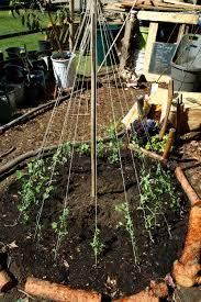 garden tasks urban agriculture ucla
