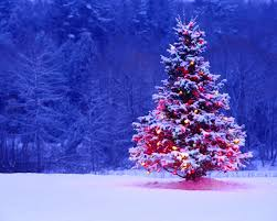 best christmas trees best christmas trees christmas day 25