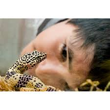 Backyard Reptiles Take Care With Pet Reptiles And Amphibians Features Cdc