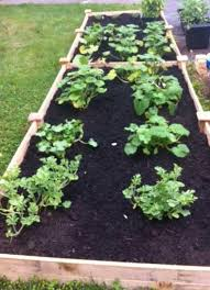 What Type Of Soil For Vegetable Garden - what type of wood should i use for my organic container garden