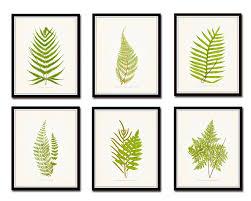 vintage ferns print set no 1 botanical print giclee art