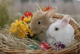 rabbit easter basket free photo rabbit easter basket free image on pixabay 555777