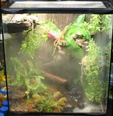Live Plants In Community Aquariums by Plants For Reptiles And Amphibians