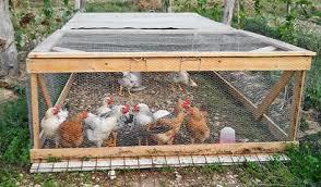 gabbia per pulcini allevare polli in gabbie mobili senza fondo