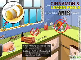 Best Way To Get Rid Of Mosquitoes In Your Backyard How To Get Rid Of Ants Fast Naturally Top 10 Home Remedies