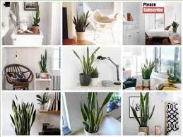 Plant For Bedroom House Plant Snake Bedroom Picture Set Of Indoor Outdoor Plants