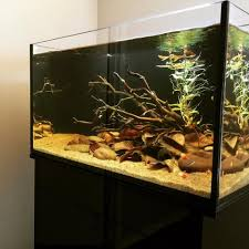 Aquascape Environmental News Page 38 Tannin Aquatics