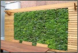 vertical garden designing services in belapur navi mumbai nature