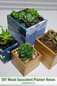 How To Make A Succulent Planter by Planting Succulents In Boxes With No Drainage