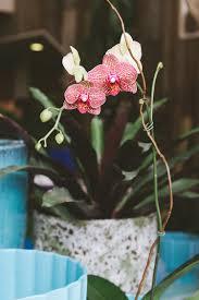 jojotastic pet friendly houseplants a diy